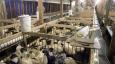 News analysis: Is foie gras halal?