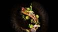 Enigma at Palazzo Versace announces next chef