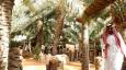 Abu Dhabi to pay farmers for saving water