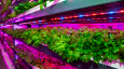 World's largest vertical farm to service Expo 2020 Dubai