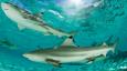 Deliveroo bans shark fin dishes from its platform