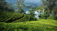 Partner Content: Ceylon tea at Gulfood 2020