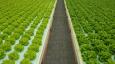 Supplier Spotlight: Armela Farms