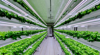 Hydroponic vertical farm to launch in UAE in Q3 2020