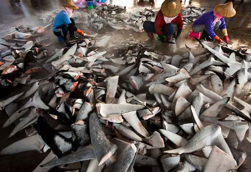Starwood has banned the procurement of shark fin across its global portfolio of hotels.