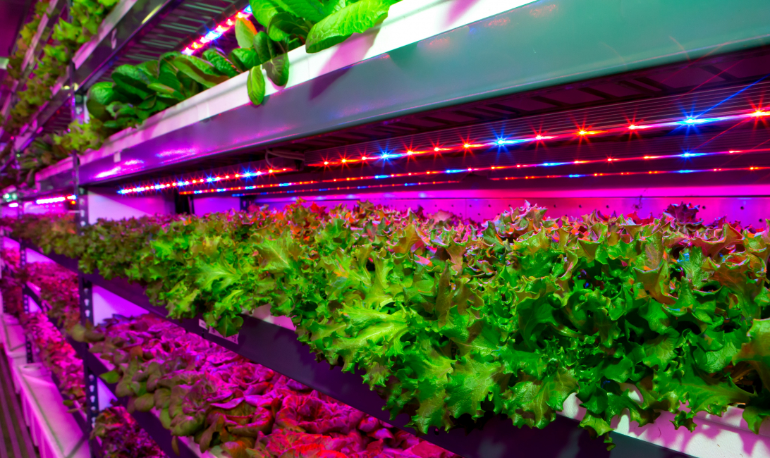 Badia Farms is one example of a vertical farm in Dubai