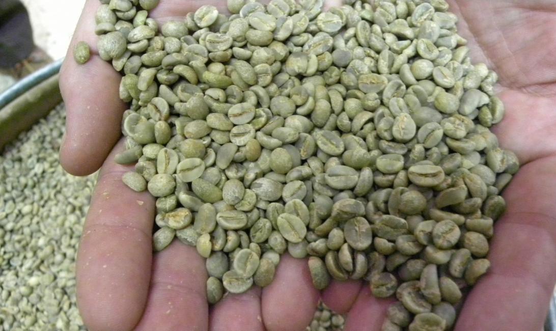 Yemeni-origin Harazi coffee
